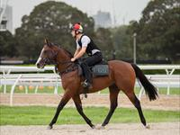 Trackwork Monday 11th January 2021