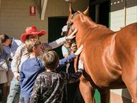 Sunday at the Stables Owner Testimonial