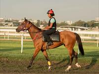 Trackwork Tuesday 11th August 2020