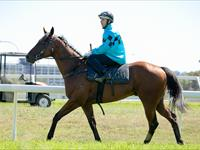 Promising 2YO Bolts in on Debut