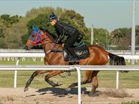 Trackwork Friday 22 March 2019