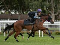 Trackwork Wednesday 28 August 2019