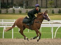 Trackwork Tuesday 15th September