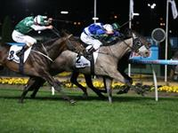 A Divine Display at Moonee Valley