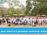 Win your share in 1 of 4 premium racehorses