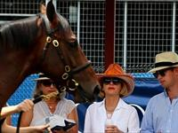 Magic Millions Riches