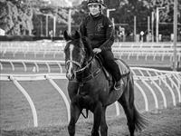 Trackwork Thursday 10th October 2019