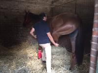 Physio Tom's Horse of the Week 11.9.15