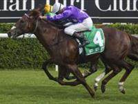 Star Thoroughbreds Are The Stars Of late