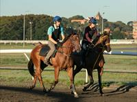 Trackwork Thursday 31st October 2019