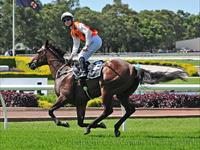 Overreach Reaches for Slipper Stardom