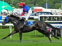 Pierro, Officialy World Class