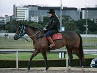 Trackwork Wednesday 17 July 2019