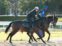 Trackwork Monday 12th October 2020