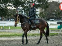 Trackwork Thursday 18 July 2019
