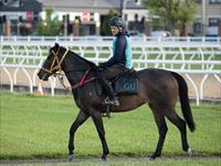 Trackwork Thursday 4th June 2020