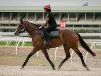 Trackwork Friday 14th August 2020