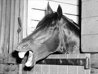 Tulloch and the 1957 Caulfield Cup