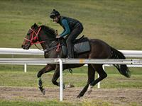 Trackwork Monday 30th March 2020