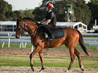 Trackwork Thursday 17th September 2020
