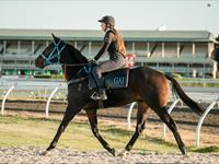 Trackwork Tuesday 17 September 2019
