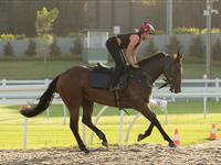 Trackwork Friday 21st February 2020