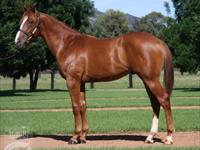 Blue Diamond Highlights Colt To Be Raced By Miss Universe