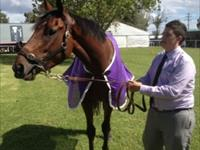 Fat Al a Joy to Watch in the Albury Guineas