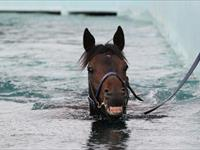 Pierro in Melbourne - as captured by Mark Gatt