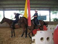 Former Champion racehorse Dance Hero trains for his new role