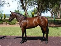 Fastnet Rock x Solvini Yearling filly