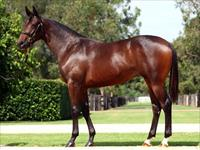 Fastnet Rock - the sire of the moment