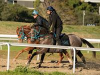 Trackwork Thursday 15 August 2019