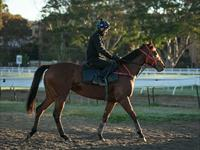 Trackwork Monday 14th October 2019