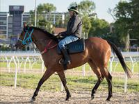 Trackwork Monday 1st June 2020
