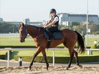Trackwork Friday 16th October 2020