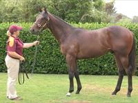 2013 Karaka Premier Yearling Sale