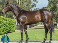 A Fantastic Opportunity To Get Involved In A Rubick Colt