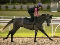 Trackwork Wednesday 12th August 2020