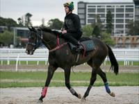 Trackwork Thursday 8th October 2020