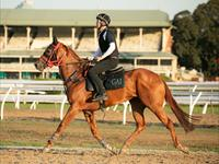 Trackwork Tuesday 24th November 2020