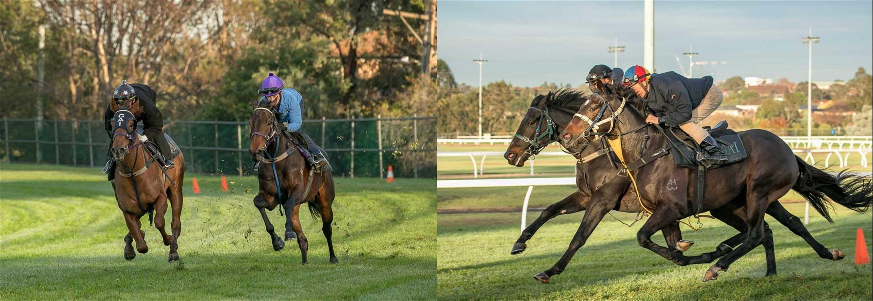 NSW Racehorse Training